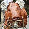 100 pound suckling pig